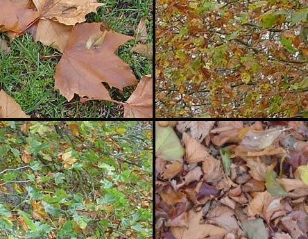 bladeren.jpg