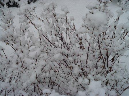 sneeuwplant.jpg